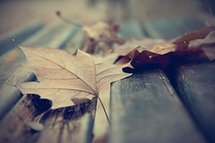 Dead leaves on bench (Elephant Digital) Tags: autumn fall leaf dead season concept melancholy gloomy homesickness romantic sad silence mood bench memories nature brown wooden old vintage detail aged dirty rough damaged autumnal park october beauty color italy