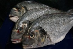 (LaTur) Tags: food seafood bream foodie orata seabream dorade