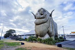 Rambo - The Big Merino (Leighton Wallis) Tags: shop giant sheep sony horns australia merino nsw newsouthwales alpha ram giftshop bigthings f40 goulburn 1635mm countrytown mirrorless a7r emount ilce7r