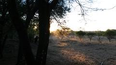 20150706_070125 (Oliver E Hopkins) Tags: africa travel sunrise botswana