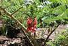 IMG_4567 (cheryl's pix) Tags: california berkeley botanicgarden botanicalgardens botanicalgarden botanicgardens berkeleyca berkeleybotanicalgarden ucbotanicalgarden universityofcaliforniabotanicalgarden universityofcaliforniabotanicalgardenatberkeley