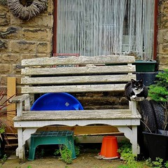 Hebden Bridge: It's That Sort of... (thephilosopherstoned) Tags: flowers pets dogs hippies cat garden candid yorkshire streetphotography documentary abandon relaxed flowerpower easygoing laidback hebdenbridge copulation doggiestyle growingwild documentaryphotography freespirits uploaded:by=flickstagram instagram:photo=1044254527657800798311672236