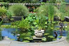 The Aquatic Garden (KaDeWeGirl) Tags: newyorkcity green pool garden bronx aquatic pergola riverdale wavehill tressle