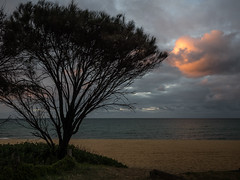 Beach sunset (bdnils) Tags: landscape sea sunset tree beach sky clouds