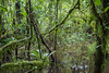 Truly Wet in the Rain Forest (jeff_a_goldberg) Tags: nathab laselva naturalhabitatadventures winter laselvabiologicalstation costarica heredia cr