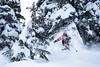 Blasting Through (Last Frontier Heliskiing) Tags: lastfrontierheli offpiste backcountry heliskiing heliski forest trees northernbc british columbia skeena vista sport ski skiing canada west