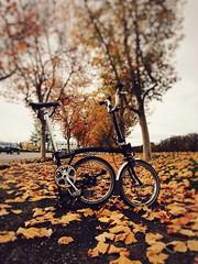 Fall & Brompton (Be Steel) Tags: fall brompton iphone foldingbike california outdoor