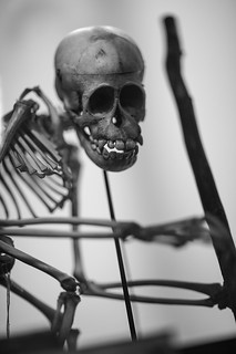 Ape skeleton