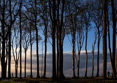 Walkers (Collin Key) Tags: beechtrees trees gespensterwald ostsee balticsea buchen spookyforest coast landscape dusk nienhagen mecklenburgvorpommern deutschland de