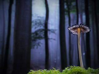 Magie des Meulenwalds