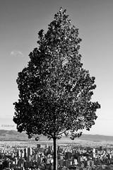 Iran - Tehran (mehryarhr1) Tags: 70d bw monochrome alone logo tehran iran 2016 photo canon tree