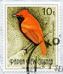 great stamp Papua New Guinea 10T Crested satinbird (Cnemophilus macgregorii, Furchenvogel, Cnémophile huppé, paradisea crestata, redős paradicsommadár, MacGregors satijnvogel, Tofssatängfågel) timbres Papouasie-Nouvelle-Guinée 우표 파푸아뉴기니 sellos Papúa Nueva (stampolina, thx for sending stamps! :)) Tags: papuanewguinea 头饰 timbres papouasienouvelleguinée 우표 파푸아뉴기니 sellos papúanuevaguinea selos papuanovaguiné γραμματόσημα παπούανέαγουινέα frimerker papuanyguinea markica papuanovagvineja pullari papuayenigine 巴布亚新几内亚 邮票 postzegels papoeanieuwguinea 切手 パプアニューギニア francobolli papuanuovaguinea postimerkit papuauusiguinea znaczkipocztowe papuanowagwinea แสตมป์ ปาปัวนิวกินี frimærker color farbe bunt colourful colour crestedsatinbird cnemophilusmacgregorii furchenvogel cnémophilehuppé paradiseacrestata redősparadicsommadár macgregorssatijnvogel tofssatängfågel orange paradiesvogel