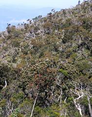20060802_56 (Badly Drawn Dad) Tags: gunungkinabalu malaysia mys sabah beautifulmorning labanrata geo:lat=605845044 geo:lon=11656592578 geotagged