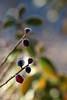 Givre exotique (Rollerphilc) Tags: canon nature feuille givre hiver couleur bokeh macro 760d