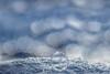 Real or not real....? (SonjaS.) Tags: winter bokeh bubbles seifenblase gefroren frozen schnee snow