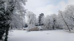 Winter beauty (l-vandervegt) Tags: 2017 nederland netherlands holland niederlande paysbas overijssel deventer park parc landschap landscape winter sneeuw snow white wit
