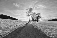 Man ehrt den Baum des Schattens wegen (Emanuel D. Photography) Tags: weg way bäume trees shadow schatten himmel sky wolken clouds schnee snow winter kalt cold aussicht äste ast black badenwürttemberg baum canon eos 1100d 1018mm f9 hdr 10mm iso100 cloudy deutschland district desaturated europa europe erde entsättigt eis einfarbig germany grau grey holz high hoch horizon horizont ice landschaft landscape licht light lossburg lens laub natur nature outdoor ortschaft picture place quiet ruhig schwarz schwarzwald schwarzweiss stm sonne tree views white weiss waldrand wood blancoynegro