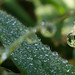 POTD 2013-08-22 - Morning dew on grass