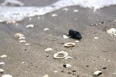Summer dreaming (Magryciak) Tags: ocean newzealand beach water canon outdoors eos sand shell pebble micro northisland coromandel 2014
