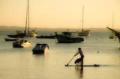 dog surfer (viniciusdsr) Tags: travel sunset sea brazil dog sun sol water animal silhouette sport rio água brasil de boats boat mar nikon barco janeiro paddle pôrdosol cachorro viagem esporte búzios iguazu silhueta standuppaddle