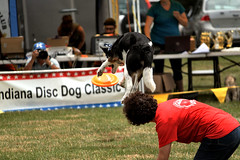 "FFF14 disc dog IMG_3453 • <a style=""font-size:0.8em;"" href=""http://www.flickr.com/photos/98159801@N08/19188990402/"" target=""_blank"">View on Flickr</a>"