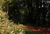Path for... nowhere (PurpleTita) Tags: trees summer italy mountain alberi torino woods italia path natura piemonte sentiero turin montagna piedmont bosco vallidilanzo canoneos1100destate