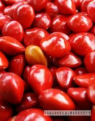 Macro of Seeds (radi0head pix'el) Tags: flowers red flower fruits asian beans seeds lucky malaysia saga asean pahang raub sagaseeds luckyredseeds raub25072015