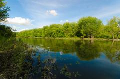Confluence (wackybadger) Tags: tree water wisconsin forest river nikon mississippiriver lakepepin piercecounty wisconsinstatenaturalarea nikond7000 sigma1020mmf4exdchsm rushriverdeltasna sna202