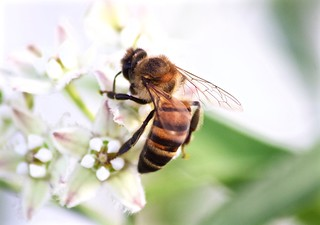 bee.payload = flower.nectar.pop()