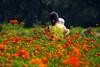 2015 Sulfur Cosmos #2 (Yorkey&Rin) Tags: summer japan tokyo mother july olympus littlegirl 夏 rin hamarikyu hotday 親子 浜離宮 2015 sulfurcosmos 黄花コスモス em5 7月 olympusm75300mmf4867ii pc236847