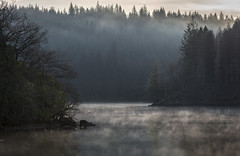 Smoke on the water (Mandlenkhosi) Tags: nikond800 lochard trossachs thetrossachs lochlomondandtrossachsnationalpark mist mistymorning misty tree trees lake