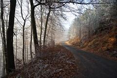 Sur la route forestière du Col de la Liese... (Excalibur67) Tags: nikon d750 sigma globalvision 24105f4dgoshsma paysage landscape forest foréts brume mist arbres trees givre vosgesdunord greatphotographers greaterphotographers greatestphotographers