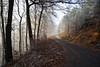 Sur la route forestière du Col de la Liese... (Excalibur67) Tags: nikon d750 sigma globalvision 24105f4dgoshsma paysage landscape forest foréts brume mist arbres trees givre vosgesdunord