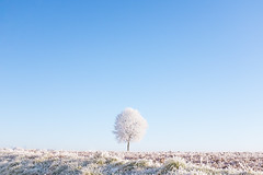 Another frozen year (Éole) Tags: tree frozen ice countryside normandy normandie winter field white minimal symmetry fujifilm x100t explored