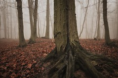 """octopus"" (Karel Hrouzek P H O T O) Tags: tree woods czech landscape landschaft forest path road nature fog haze mist frost mountains water snow autumn winter fall wind clouds inversion 2017 january december christmas"