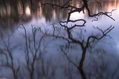 Berührung im See (zora_schaf) Tags: nymphenburgerschlospark nymphenburg see spiegelung reflection langzeitbelichtung longexposure münchen munich zoraschaf berührung touch