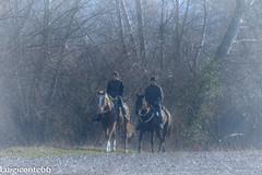 senza titolo (conteluigi66) Tags: cavalli cavalieri coppia natura prato alberi verde a luigiconte