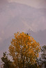 Merry Xmas... :) (GoCiP) Tags: merry xmas christmas travel photography travelogue photojournalism happiness tis the season tistheseason bokeh bokehlicious mountains autumn colors trees bird beauty beautiful northern areas northernareas naran balakot pakistan gocip gocinematic gondal zeeshangondal