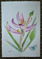 Heliconia - watercolor (Márcia Valle) Tags: heliconia watercolor painting pintura aquarela márciavalle nikon brasil brazil juizdefora arte art florabrasileira brazilianflora musaceae
