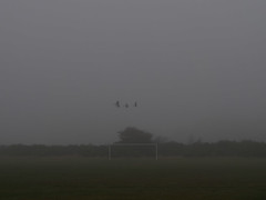 Goal Flight (Magic Pea) Tags: mist nature green football forestgate london wansteadflats goal photo photography magicpea birds flying quiet minimal