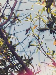 004_el florecido2017 (David Valarezo Roca) Tags: quito fotografía conceptual 365 ecuador exterior color vintage analog light flare flor