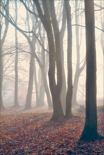 Ashridge Mist V