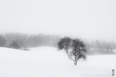 2222 (alamond) Tags: tree lonesome lone snow storm white landscape winter flakes snowflakes bw blackandwhite monochrome fog mist canon 7d markii mkii llens ef 1740 f4 l usm alamond brane zalar