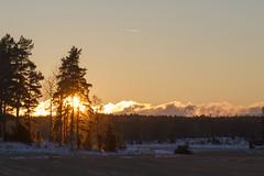 Winter afternoon (Dencku) Tags: vinter talvi winter solnedgång aurinkolasku sunset siluett silhouette siluetti åker pelto field träd puu tree moln pilvi cloud snö lumi snow sol aurinko sun porkala porkkala junkars kyrkslätt kirkkonummi finland suomi