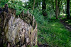 arte alternativa (Clay Bass) Tags: savigliano bokeh bole fuji green natural path trees x70