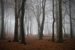 Into the morning mist (SimonLea2012) Tags: lonely haunted light uk silhouettes leaves weather fog woodland wander morning woods mist