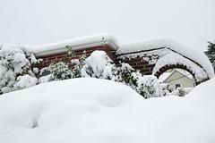 a white world (Ben McLeod) Tags: oregon portland sellwood winterstorm snow