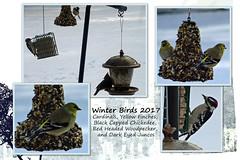 Backyard Birds (~Vicki) Tags: cardinal red headed woodpecker blackcapped chicadee yellow finch wisconsin backyard birds