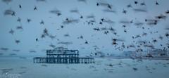 Starling murmuration over Brighton West Pier (kaths piccies) Tags: brighton blurredmotion longexplosure murmuration starlings brightonwestpier canonef100mmf28lis pier