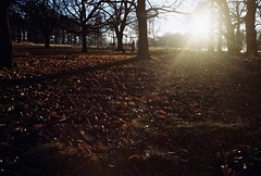 Richmond Park (thomas100) Tags: olympus 35 rc agfa vista 200 film richmond richmondpark trees sunlight sun leaves silhouette flare branches green nature earth london